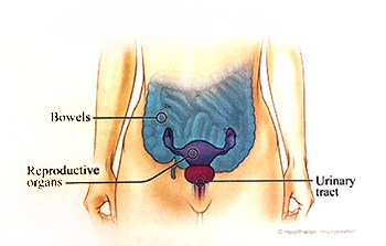 Pelvic pain in women is pain below the belly button.